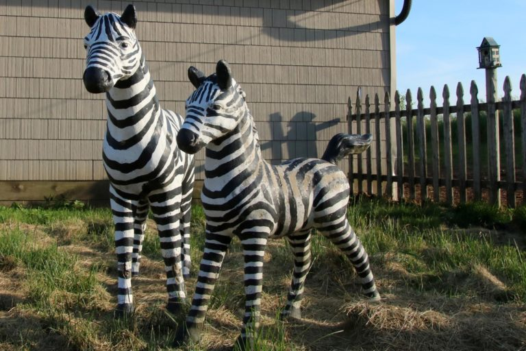 Foreside Acres Zebras